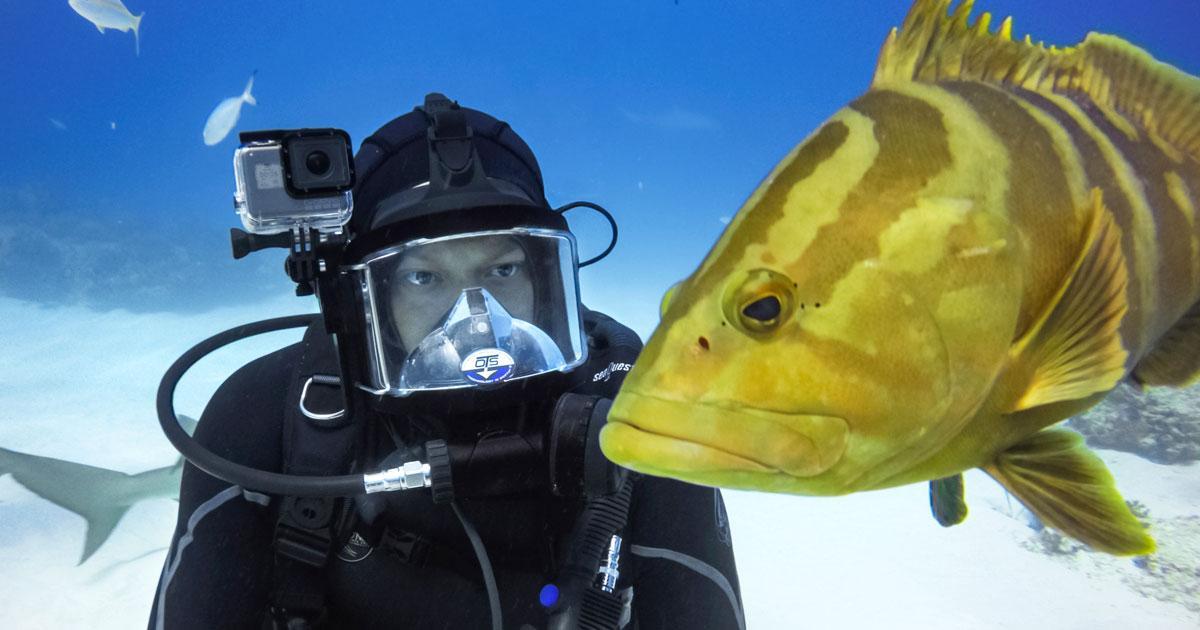Miglior Camera Subacquea : Gopro subacquea guida ai migliori accessori e setting underwater