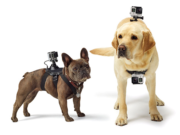GoPro Fetch Pettorina per Cane